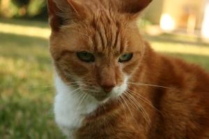 Tabby | 2008