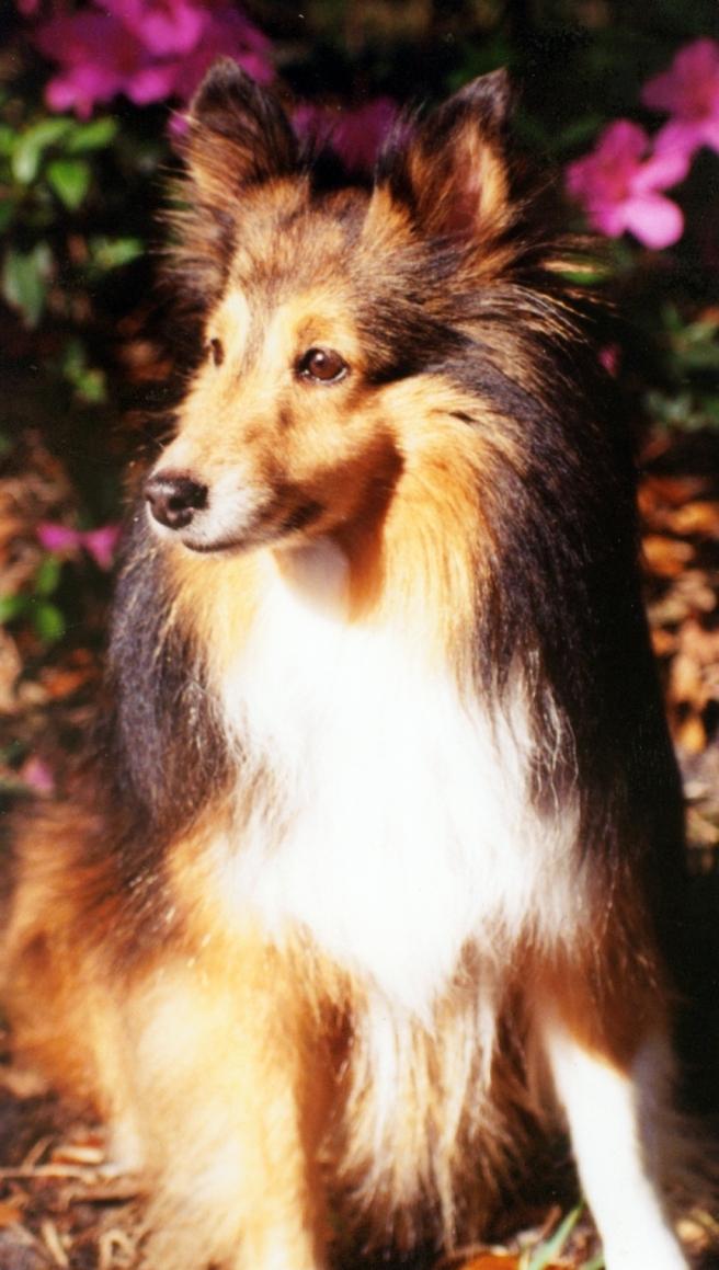 Jessie | 1987 - 2003