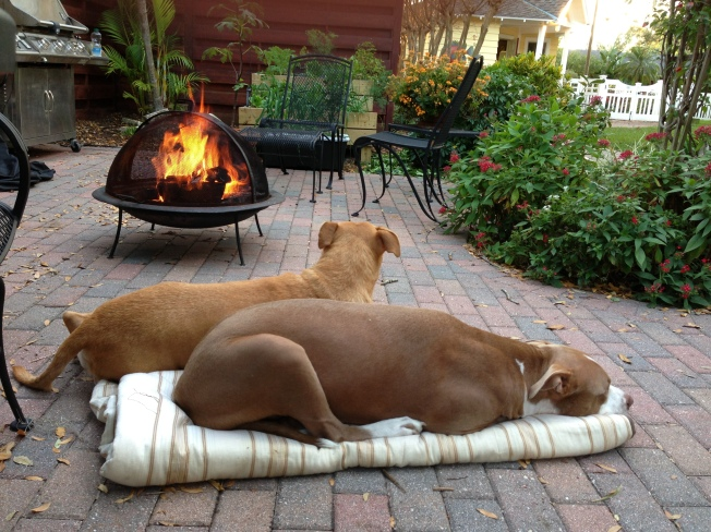 dogs by the fire