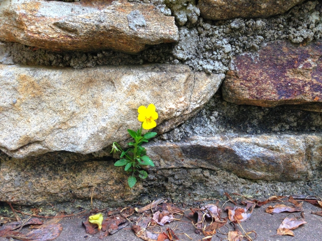 flower in rock